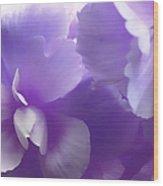 Softness Of Purple Begonias Wood Print