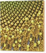 Solar Flair Wood Print