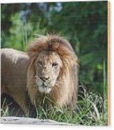 Solemn Lion Wood Print