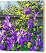 Solina Clematis On Fence Wood Print