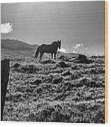 Equine Silhouette Wood Print