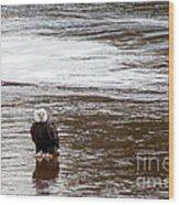 Solitary Eagle Wood Print