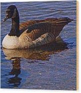 Solitary Goose Wood Print
