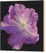 Solitary Pink Petunia Wood Print