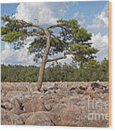 Solitary Tree Amidst Field Of Boulders Wood Print