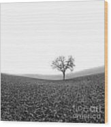 Solitary Tree In Winter. Auvergne. France Wood Print