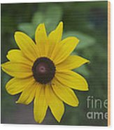Solo Black-eye Susan Wood Print