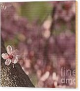 Solo In The Blossom Chorus Wood Print