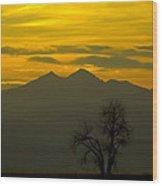 Solo Tree With Longs Peak Wood Print by Rebecca Adams
