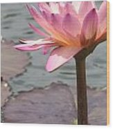 Solo Waterlily Wood Print