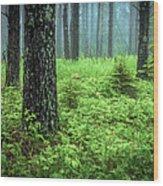 Solstice Glow  Wood Print