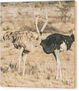 Somali Ostriches Kissing Wood Print