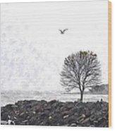 Somber Flight Wc Wood Print