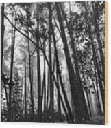 Somber Morning Wood Print