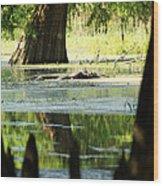 Some Turtles At Radium Springs Creek Wood Print