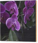 Some Very Beautiful Purple Colored Orchid Flowers Inside The Jurong Bird Park Wood Print