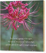 Song Of Solomon - The Flowers Appear Wood Print