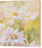 Song Of Spring I - Lovely Soft Pink Daisies Wood Print