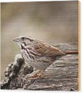 Song Sparrow On Stump Wood Print