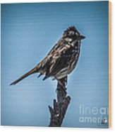 Song Sparrow On Top Of Branch Wood Print