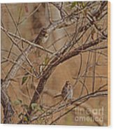 Song Sparrows Wood Print