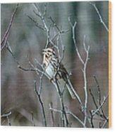 Songs Of Sparrows Wood Print