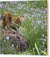 Sonoma In The Wildflowers Wood Print