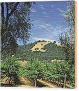Sonoma Valley Vineyard Wood Print