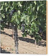 Sonoma Vineyards In August In The Sonoma California Wine Country 5d24487 Wood Print by Wingsdomain Art and Photography