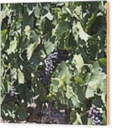 Sonoma Vineyards In The Sonoma California Wine Country 5d24489 Wood Print