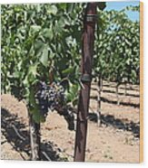 Sonoma Vineyards In The Sonoma California Wine Country 5d24490 Wood Print
