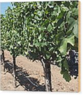 Sonoma Vineyards In The Sonoma California Wine Country 5d24491 Wood Print