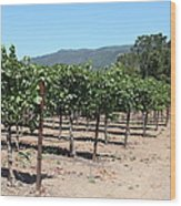 Sonoma Vineyards In The Sonoma California Wine Country 5d24492 Wood Print
