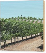 Sonoma Vineyards In The Sonoma California Wine Country 5d24506 Wood Print