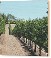 Sonoma Vineyards In The Sonoma California Wine Country 5d24507 Wood Print