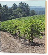 Sonoma Vineyards In The Sonoma California Wine Country 5d24512 Wood Print