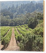 Sonoma Vineyards In The Sonoma California Wine Country 5d24518 Wood Print