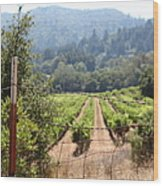 Sonoma Vineyards In The Sonoma California Wine Country 5d24521 Wood Print