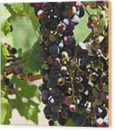 Sonoma Vineyards In The Sonoma California Wine Country 5d24572 Vertical Wood Print