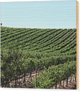 Sonoma Vineyards In The Sonoma California Wine Country 5d24588 Wood Print