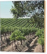 Sonoma Vineyards In The Sonoma California Wine Country 5d24594 Wood Print