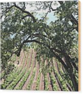 Sonoma Vineyards In The Sonoma California Wine Country 5d24619 Vertical Wood Print