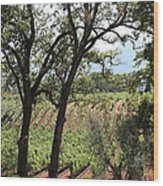 Sonoma Vineyards In The Sonoma California Wine Country 5d24622 Wood Print