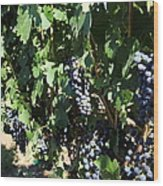 Sonoma Vineyards In The Sonoma California Wine Country 5d24629 Wood Print
