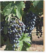 Sonoma Vineyards In The Sonoma California Wine Country 5d24630 Square Wood Print