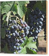 Sonoma Vineyards In The Sonoma California Wine Country 5d24630 Vertical Wood Print