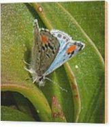Sonoran Blue Wood Print