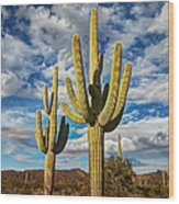 Sonoran Desert Beauty Wood Print