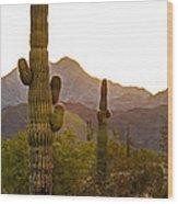 Sonoran Desert II Wood Print by Robert Bales