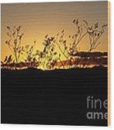 Sonoran Desert Sunset Wood Print